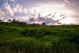 Lush Landscape - Photo by Josh Utley
